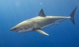 TOP10: Zvieracie naj z morských hlbín