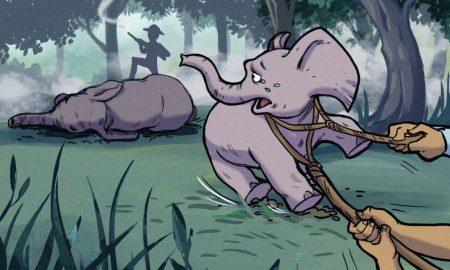 """Prečo sedíme slonom na chrbtoch? Tu je niekoľko dôvodov, prečo na túto """"zábavu"""" radšej zabudnite"""