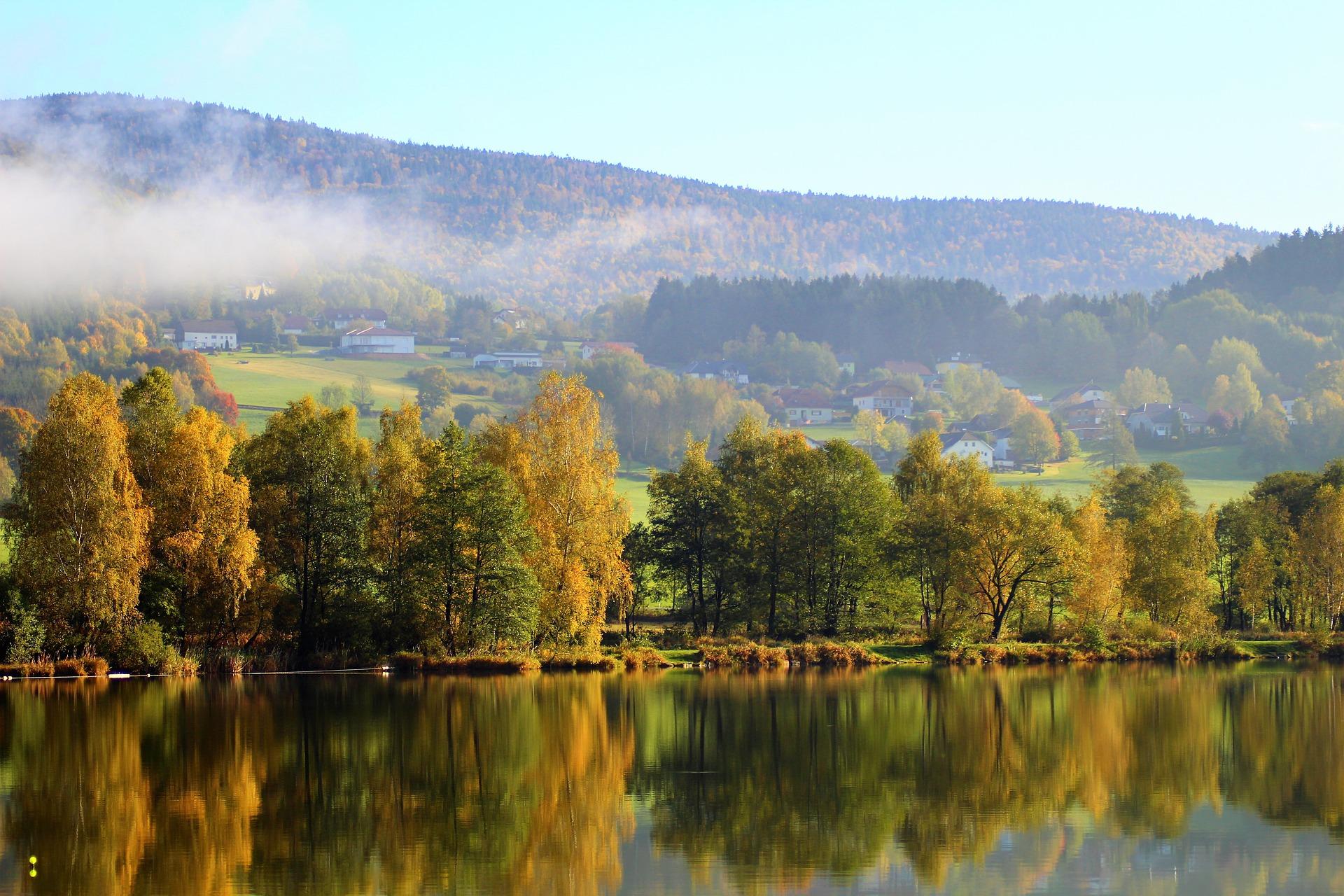 Po celom svete sa lesy zmenšujú v dôsledku odlesňovania, rozvoja miest a zmeny klímy. V Európe sa ale tento trend zmenil.