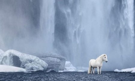 Fotograf zachytáva rozprávkové zviera, ktoré sa túla po islandskej krajine