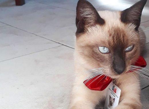mačku