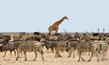 TOP10: Zvieratá, ktoré dokážu chodiť už minútu po narodení. Prečo to ľudom trvá mesiace?