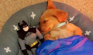 10+ vtipných foto s psíkmi v hlavnej úlohe, ktoré ti zaručenie zlepšia náladu