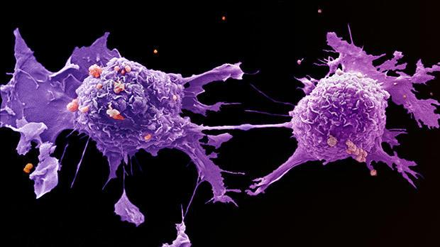 výskyt rakoviny