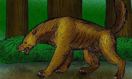 Bájny medveď nandi: Šelma požierajúca mozgy?