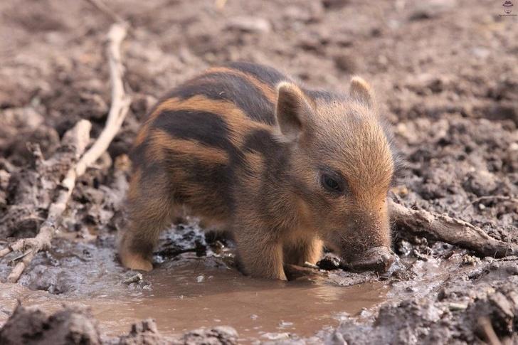 mláďatá