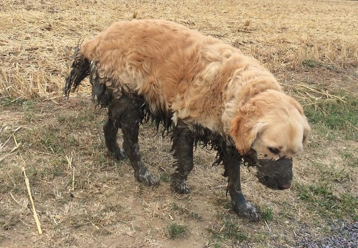 10 dôvodov, prečo by si nemal psa nechávať hrať sa v blate